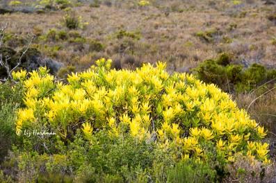 Prolific flowering in July.