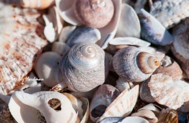 Shells_02