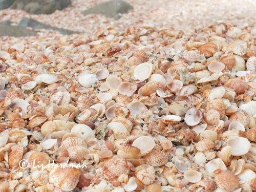 Shells_01