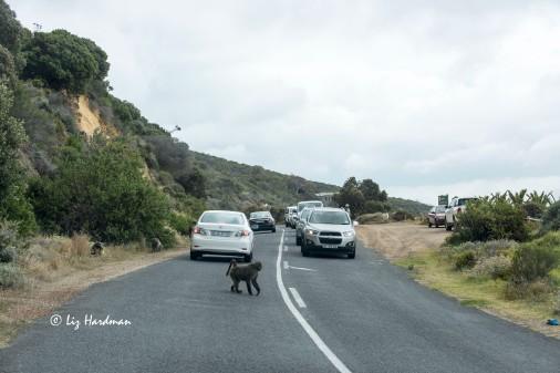 Smitswinkel troop on the road.