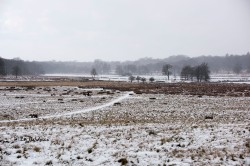 Looking towards Potten Pools, Richmond Park 28 February