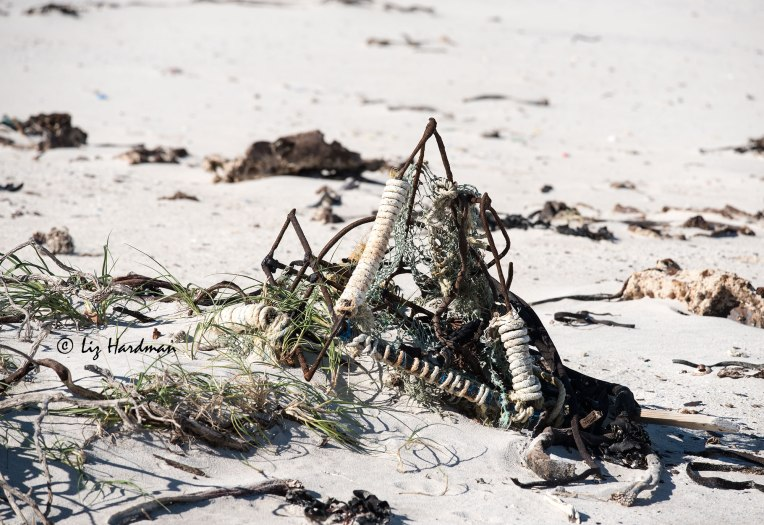 Cape lobster trap washed ashore