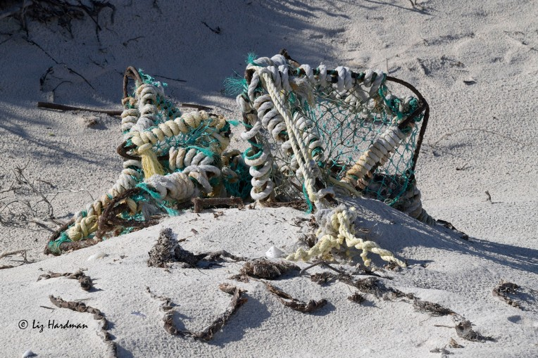Discarded Cape lobster trap