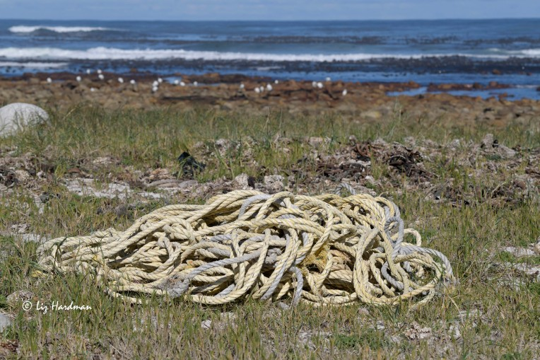 Piles of discarded fishing rope washed up on the shore