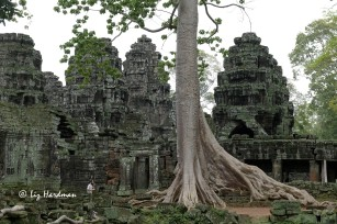 The towering silk cotton tree at Preah Khan