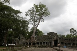 "Preah Khan: ""Sacred Sword"" is a huge monastic complex full of carvings, passages and fantastic tree root buttresses."